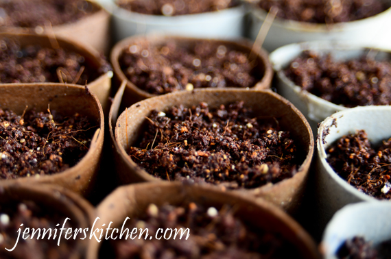 Creative Vegetable Seed Starting Containers
