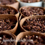Creative Ideas for Vegetable Seed Starting Containers