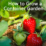 Small Space Gardening – How to Grow a Garden in Containers