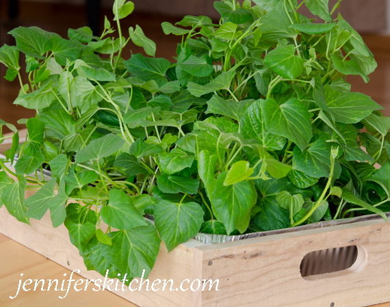 How to Grow Sweet Potatoes 4