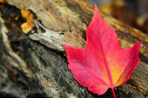 Autumn-leaf-color