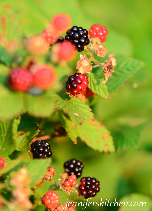 Blackberries-picking