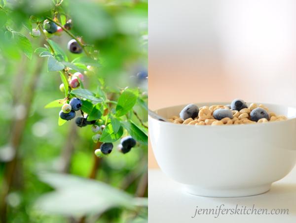 blueberries-SFW