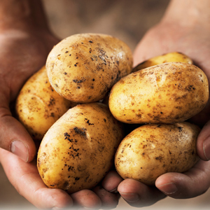 grow potatoes in the winter